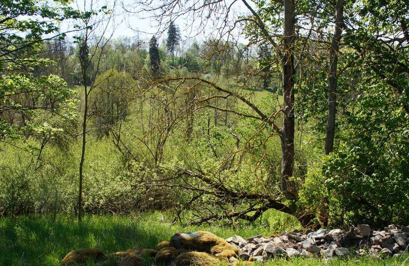 Blick in ein Tal mit vielen verschiedenen Gehölzen und mit Wiesen