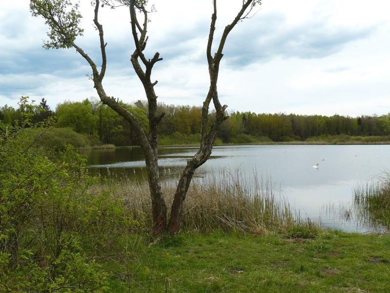 Zwischen Kürbitz und Thiergarten liegt der Burgteich, ein beliebter Rast- und Brutplatz für Vögel