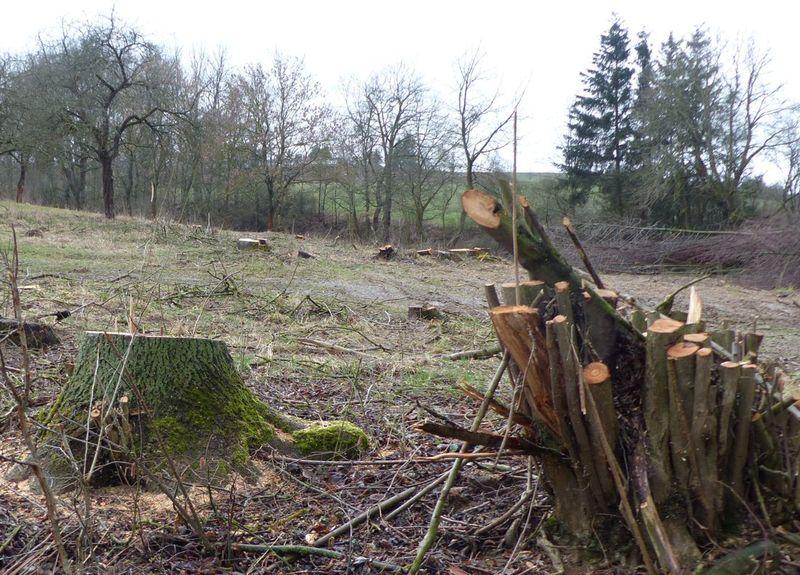 Bei Rodersdorf wurde eine Streuobstwiese abgeholzt.