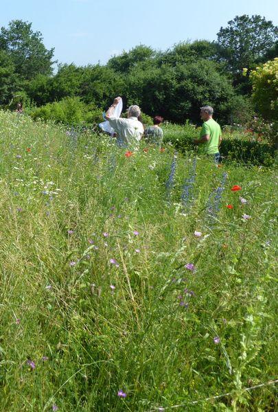 Eine Gruppe Menschen bestimmt in einer Wildblumenwiese verschiedene Hummelarten